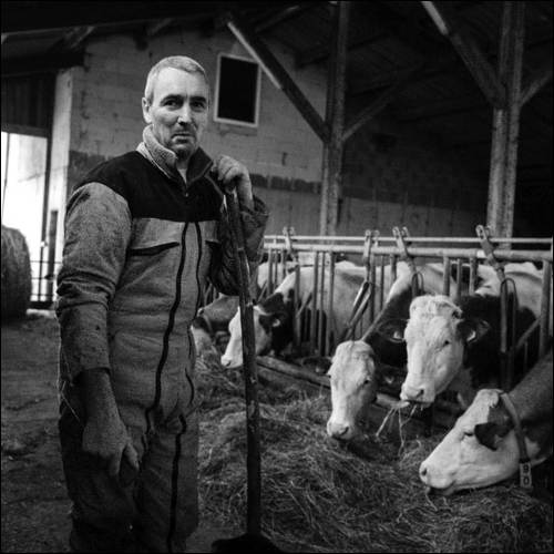 Michel Borel - Vaches laitières - Elevage - Forest Saint Julien